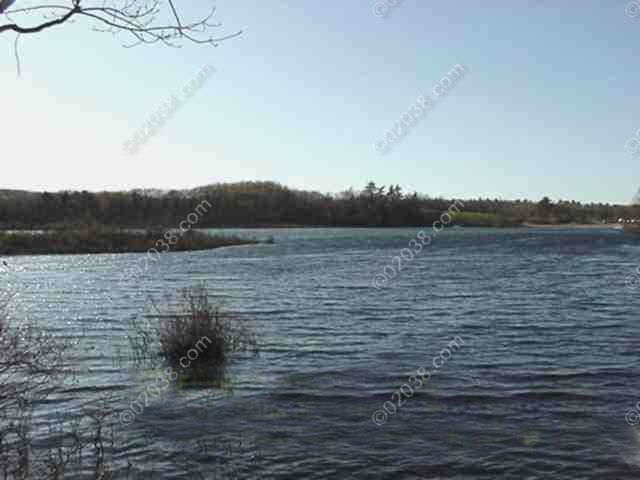 other-end-of-pond_wm