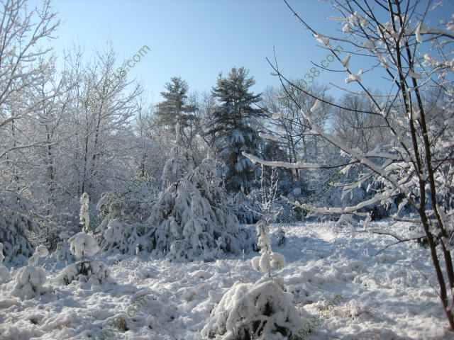 First Snow Dec 2009 Franklin MA 1
