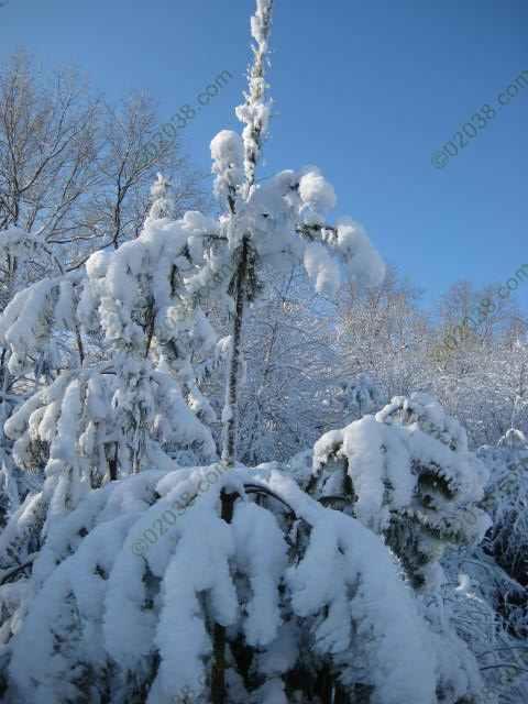 First Snow Dec 2009 Franklin MA 2