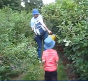 Blueberry Franklin MA Gianetti picking